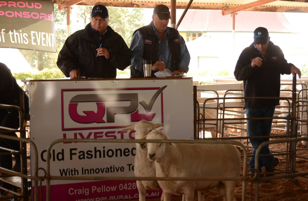 Aussie rams for sale at Narrandera