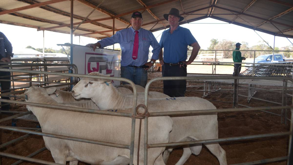 Craig Pellow with Michael Madden, and the draft od Aussie White rams Mr Madden purchased.