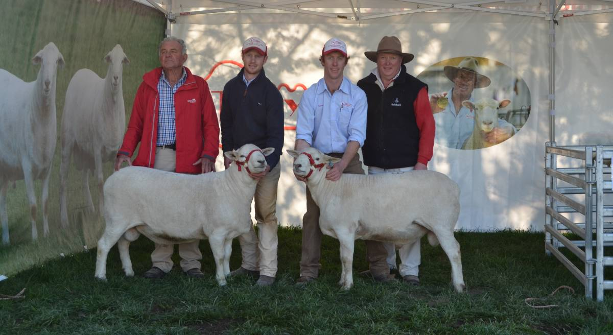 Murray Sargent, Taupo, New Zealand, Ross, James and Graham Gilmore, Tattykeel studs, Oberon, with two of the rams that sold for $28,000 and $22,000 respectively, headed to New Zealand.
